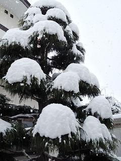 121208_snow_01.jpg