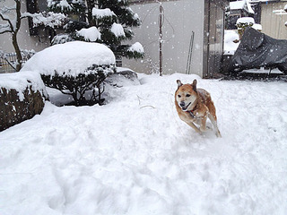 121208_snow_02.jpg