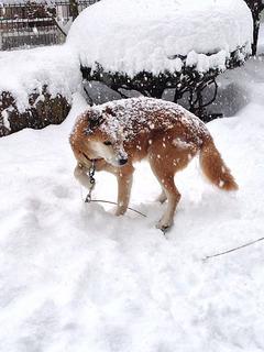 121208_snow_03.jpg
