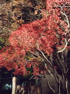 盛岡中央公民館 夜の紅葉