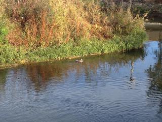 写真 2012-11-11 8 26 01.jpg