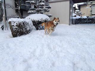 雪に喜ぶケイン